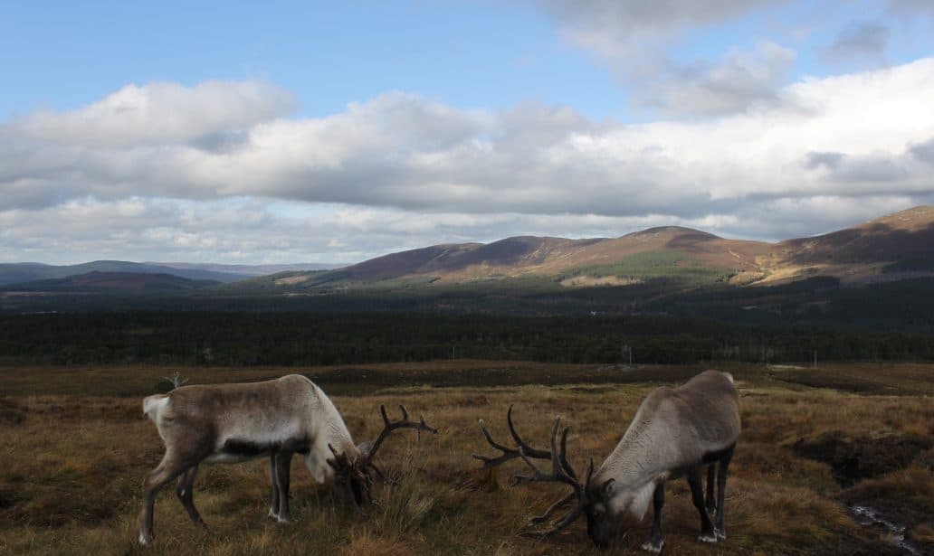 Picnicking in the Cairngorms