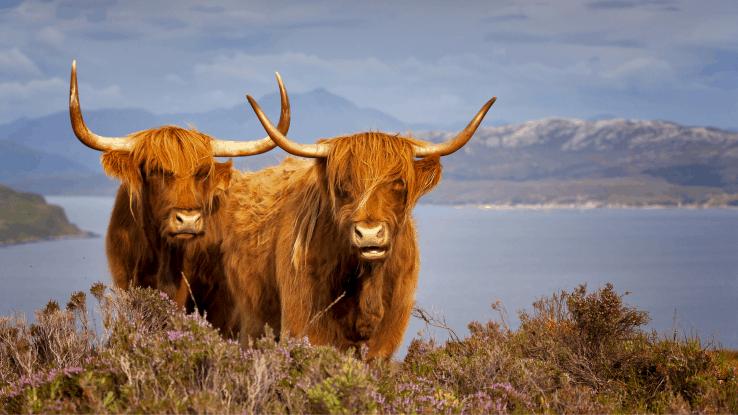Scottish National Trust